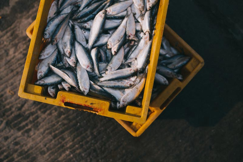 UK Fisheries Post-Brexit